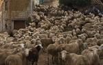 Flock of sheep in La Pobla del Bellestar, province of Castellón / Joaquín Campos.