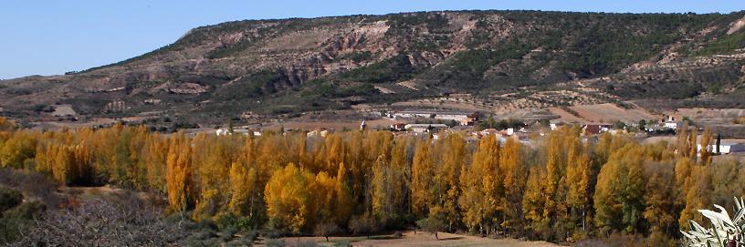 Poplar grove in Muduex, Guadalajara.