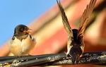 Little friends. Sparrows / Concepción Coronado Bravo