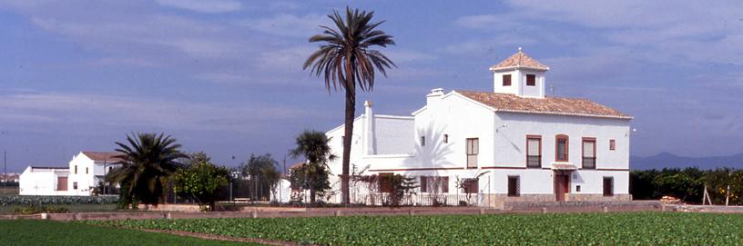 Orchard in Alboraya, Valencia.