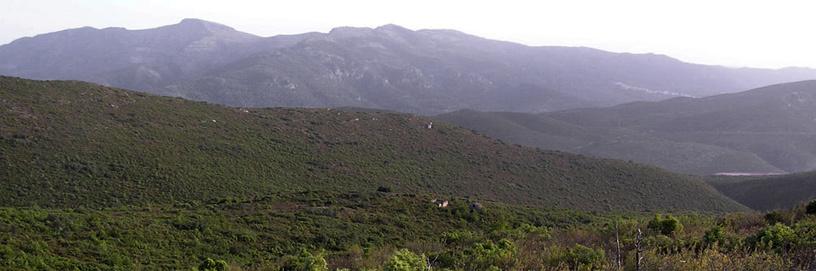 Bufali, Valencia.
