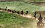 Convoy of horses in the Way of el Cid / Juan Antonio Bascón.
